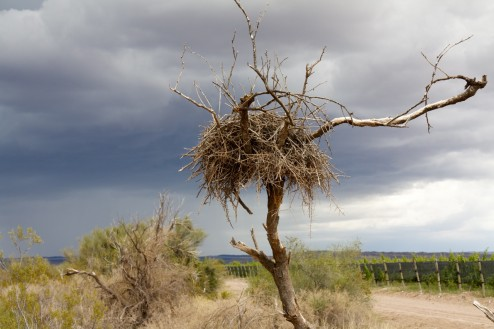 Nest Against A Storm, Bodega Altos Las Hormigas