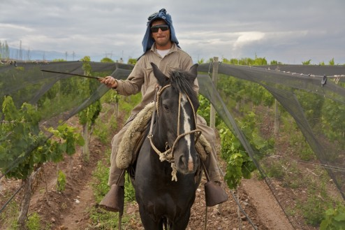 Biodynamic Pruning, Altos Las Hormigas